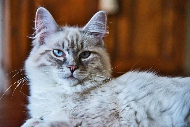 Macska-téli-tartása-2