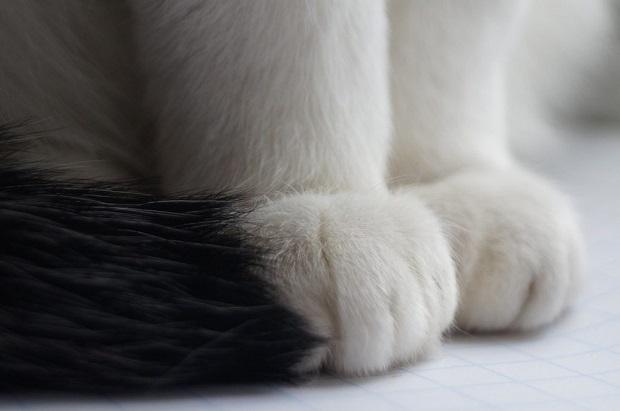 Macska-téli-tartása-3