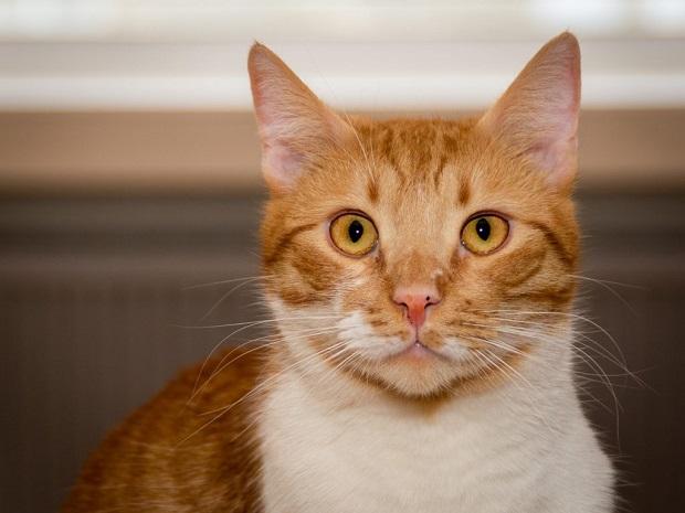 Macska-téli-tartása-4