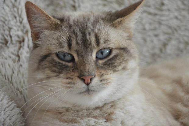 Macska-téli-tartása-5
