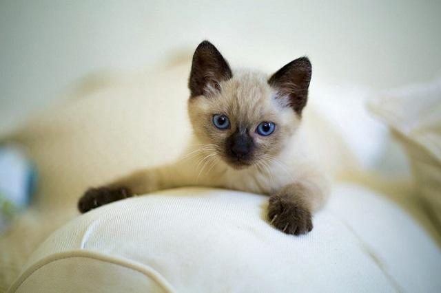 cica-tartása-lakásban-1