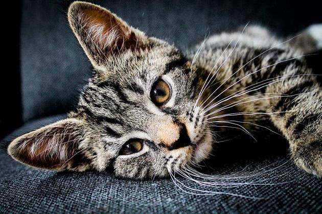 cica-tartása-lakásban-11