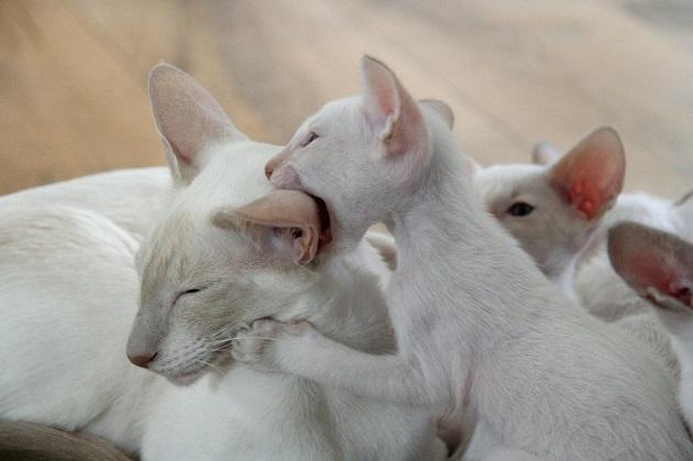 cica-tartása-lakásban-12