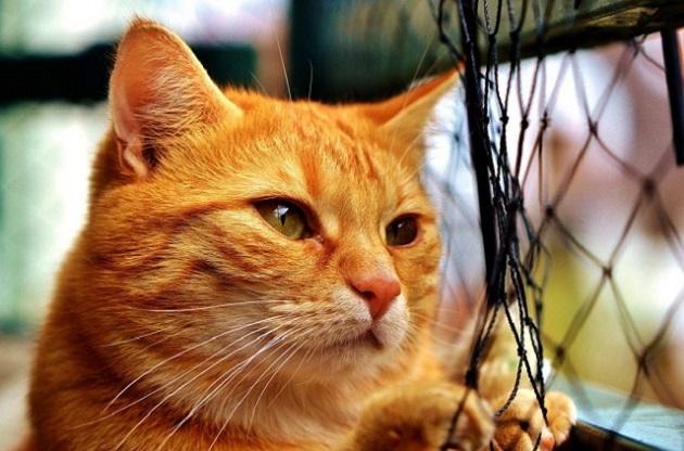 cica-tartása-lakásban-13