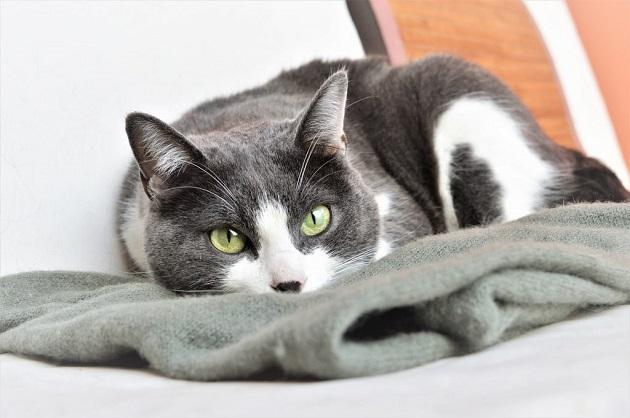 cica-tartása-lakásban-9