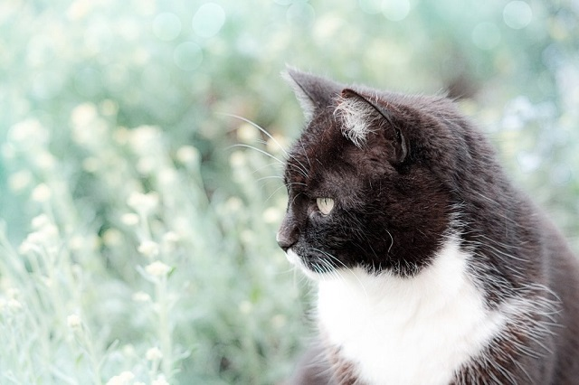 félős-cica-1