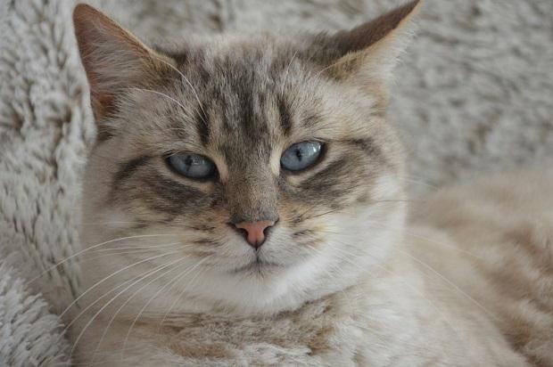 félős-cica-2