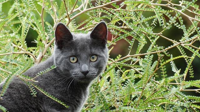 félős cica