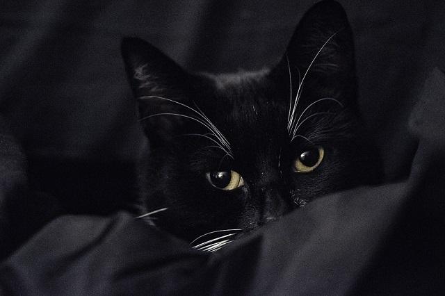 félős-cica-5
