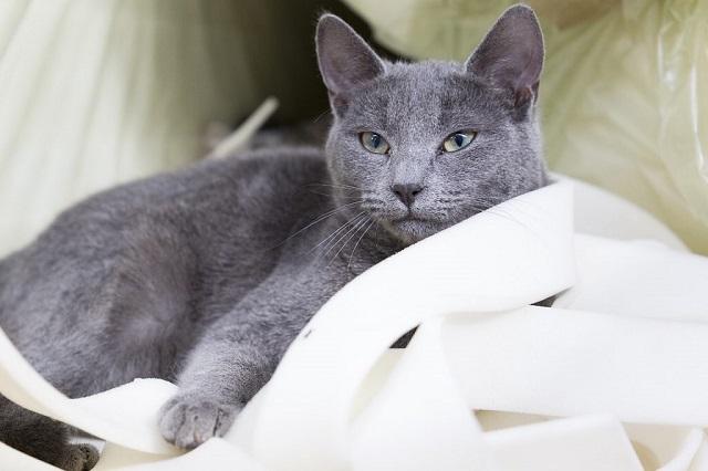 hamuszürke-macska-2