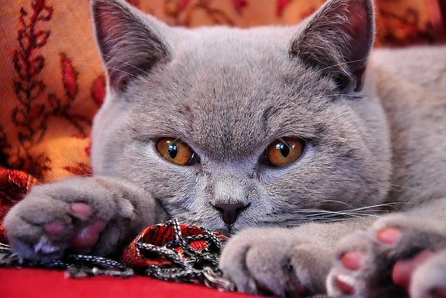 hamuszürke macska-3