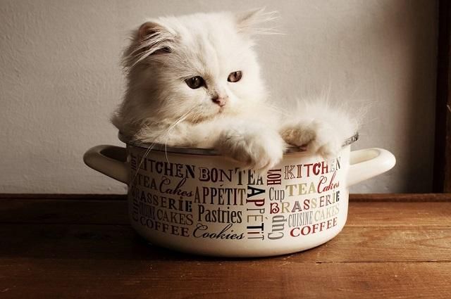 kölyök-macskák-1