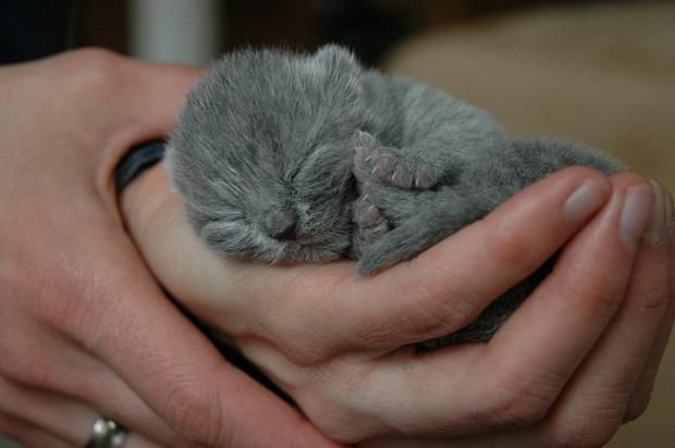 kölyök-macskák-3