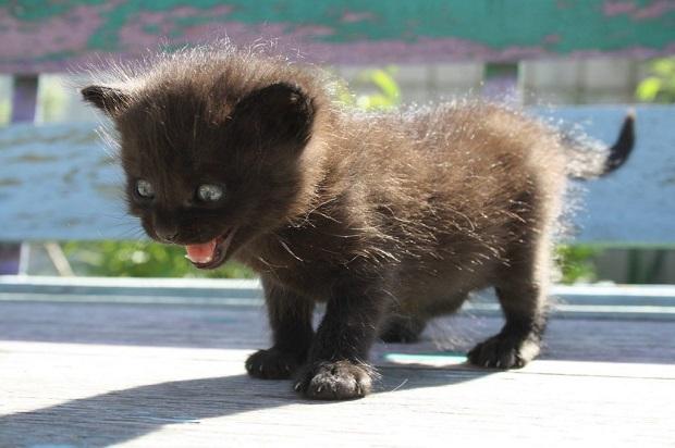 kölyök-macskák-4