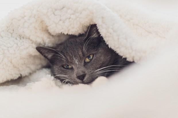 kölyök-macskák-5