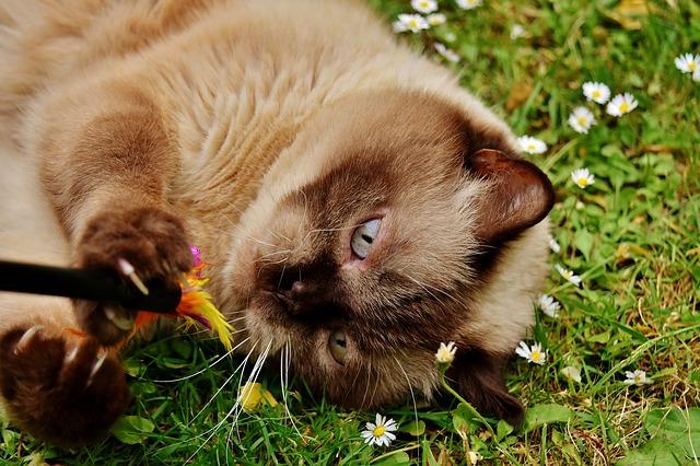 macska kiszoktatása