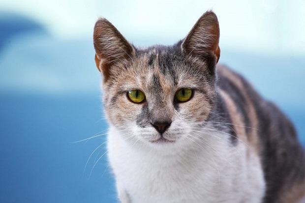 macska-kiszoktatása-3