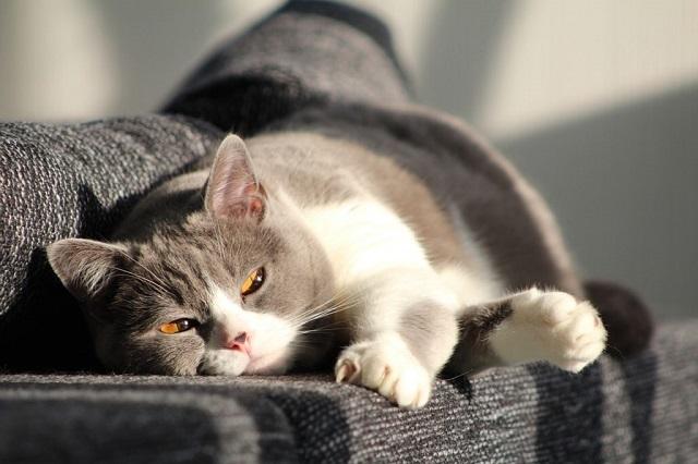 macska-kiszoktatása-4
