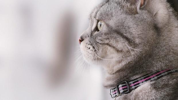 macska-kiszoktatása-5