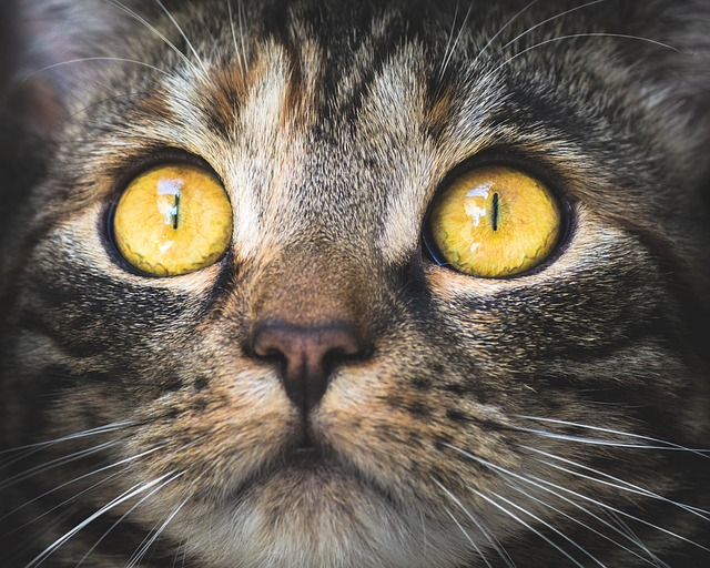 étvágytalan cica