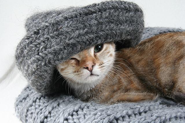 macska szobatisztaságra szoktatása
