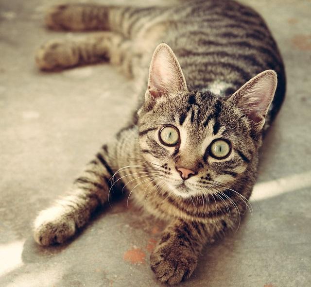 macska-szobatisztaságra-szoktatása-5