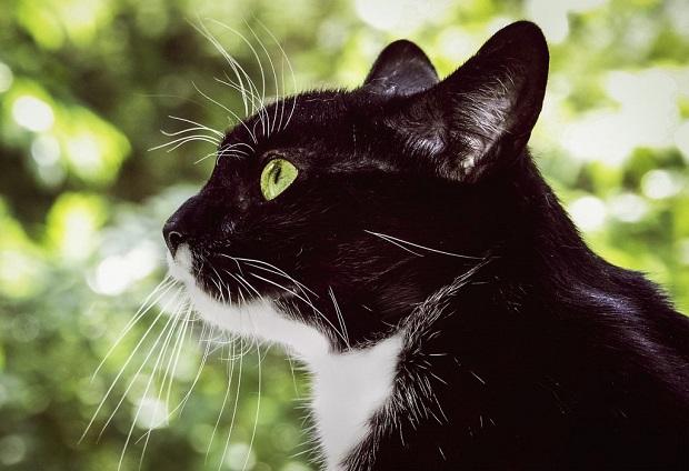 macska-szobatisztaságra-szoktatása-6