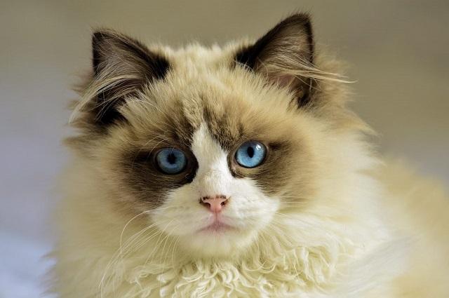 macska-tulajdonságai-1-