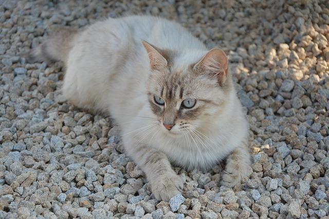 macska tulajdonságai