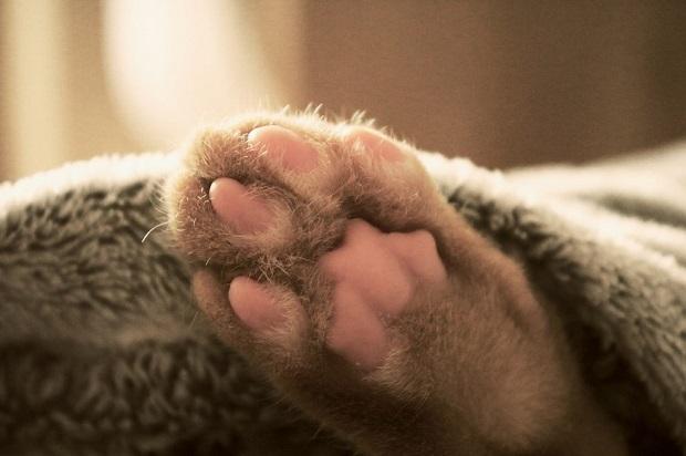macska-tulajdonságai-2