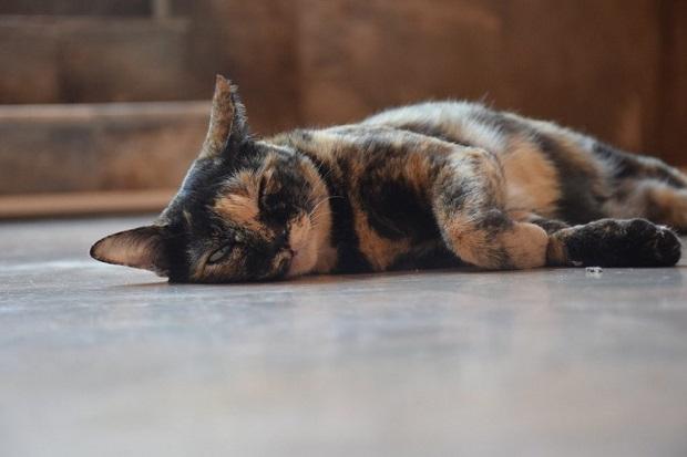 macska-tulajdonságai-3