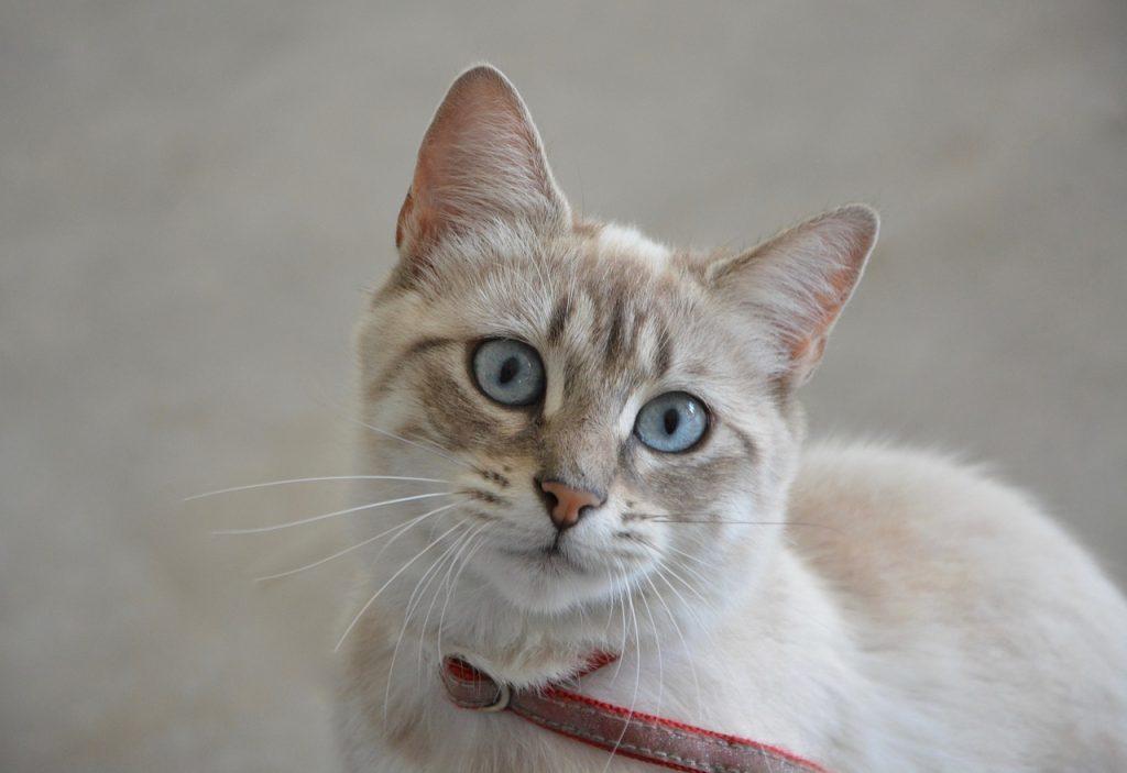 válogatós macska
