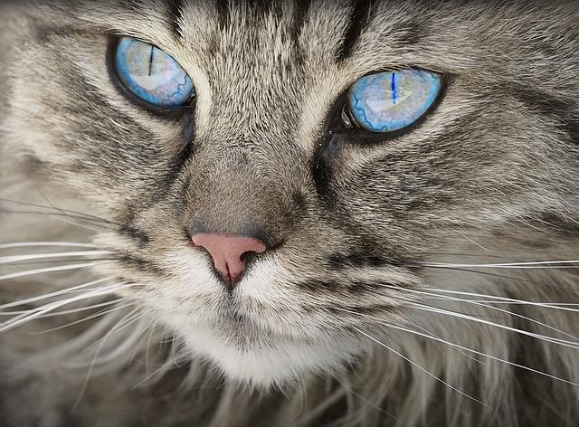 kóbor cica befogadása