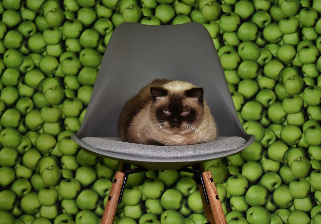éhes macska