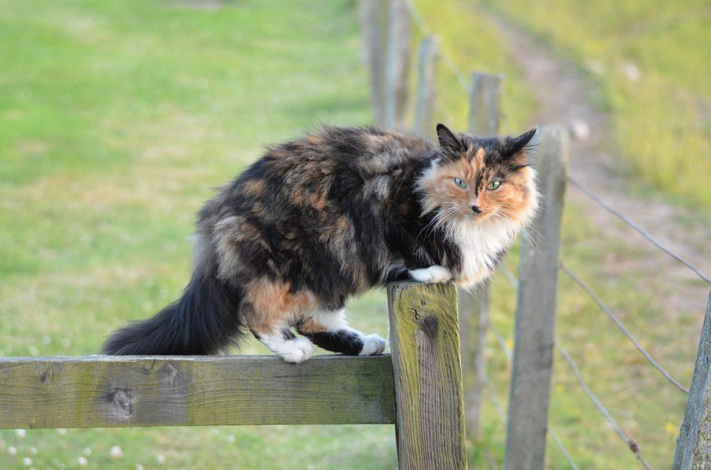öreg macska viselkedése