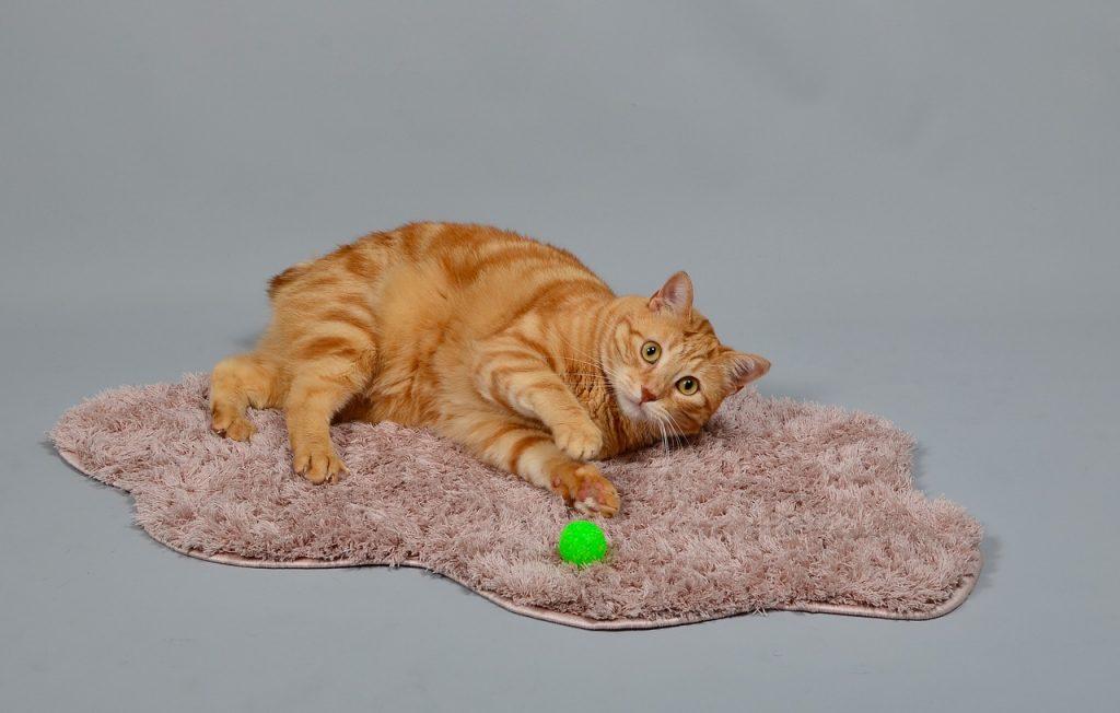 macska húgykő