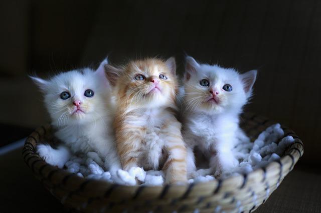 Mikor lehet elválasztani a cicákat