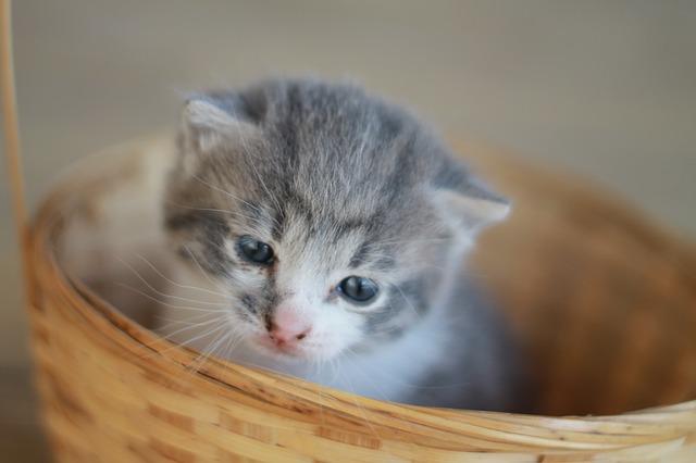 keverék kiscica