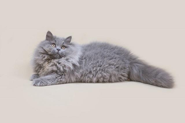 macska-tüzelés-csillapítása-1-a