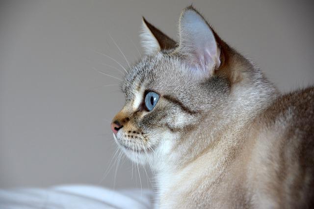 macska tüzelés csillapítása