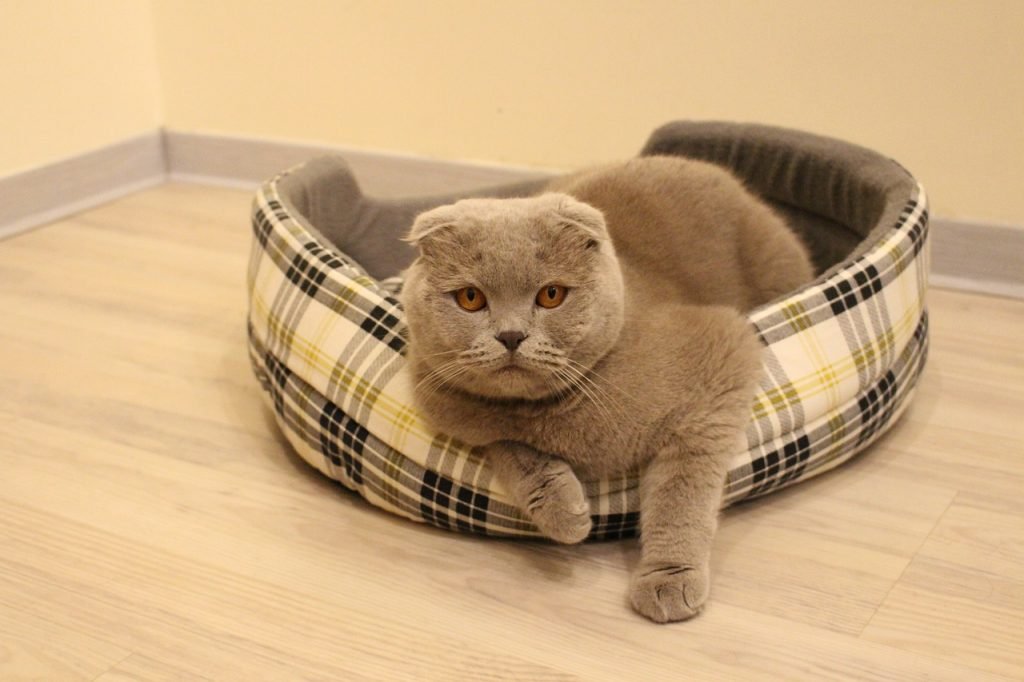 macskatartás veszélyei