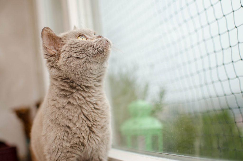 miért hullik a macska szőre