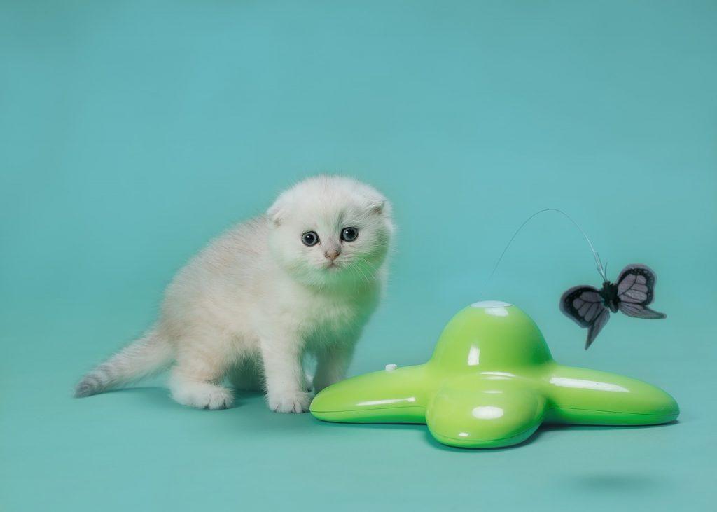 pillangós macskajáték teszt