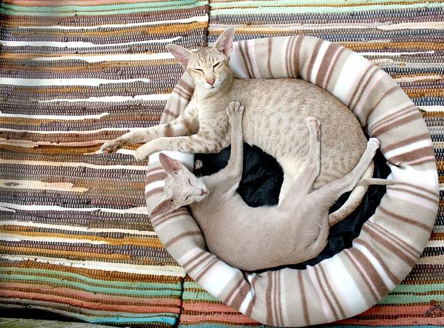 két macska egy lakásban