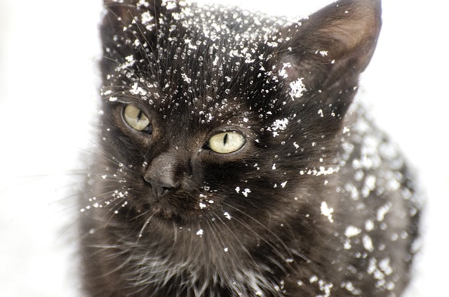 kinti cica télen