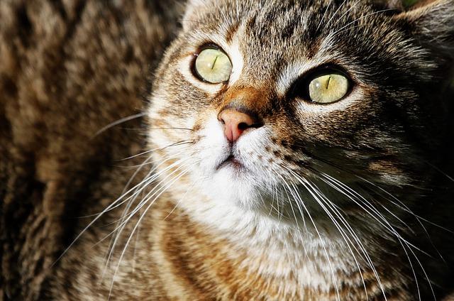 macska új házhoz szoktatása