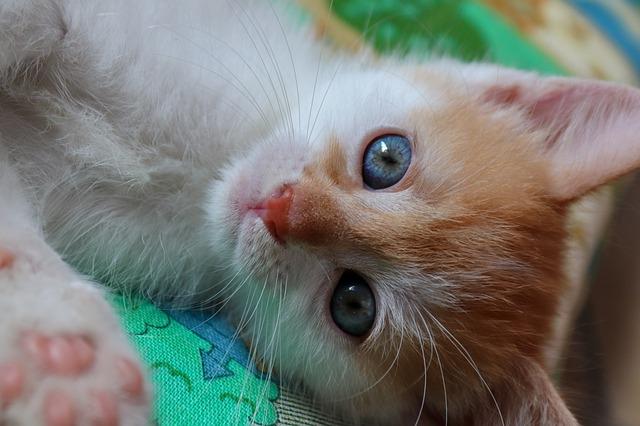 macska új házhoz szoktatása 3