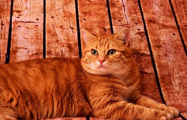 macska lakásban egyedül