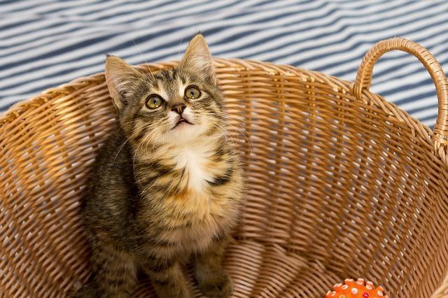macska tartása panelben