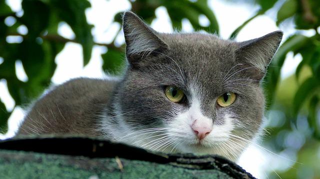 cica hűtése nyáron